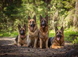 Conoscere il Cane