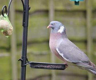 Altri uccelli