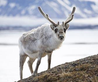 Animali del nord