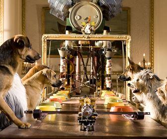 Pensioni per cani